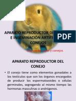 Aparato reproductor del conejo e inseminación artificial en conejos
