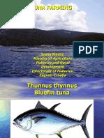 Tuna Farming - Ivana Miletic