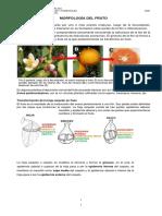15 EL FRUTO 2020.pdf
