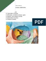 FINAL CAVIDAD ORBITARIA PARCIAL (1).pdf