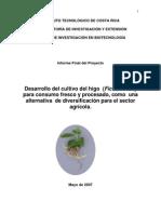 Desarrollo+del+Cultivo+del+Higo
