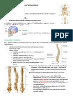 Anatomia umana uni 1.docx