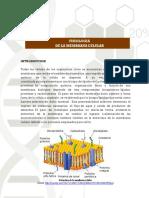 Laboratorio 9. Fisiologia de la Membrana