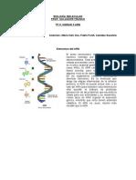 U3  Estructura del ARN  Oza Pardi Suzanne.docx