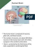 Study_of_Human_Brain