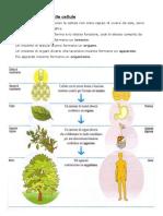 cellula.sistema.apparato.organo.pdf
