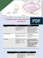 Tabla comparativa genomas .pptx