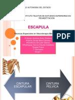 Neurofacilitacion propioceptiva Escápula