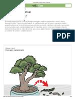 3 formas de podar un bonsai - wikiHow