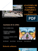 ANATOMÍA DE LA ÓRBITA, PÁRPADOS Y VÍAS LAGRIMALES.