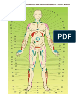 Проекционные зоны внутренних органов на теле человека со стороны живота