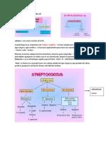 laboratorio streptococos