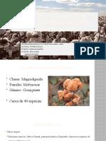 NOVO Manejo Integrado de Doenças do Algoeiro (Gossypium