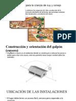 2da clase  cuyes Construcción  del galpón (cuyero)