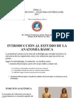 CLASE III - ANATOMIA Y FISIOLOGIA DEL SN - DR SANTOS PUAC - ANATOMIA EXTERNA DEL