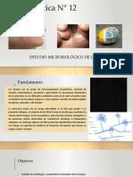 Práctica N° 12 Estudio Microbiológico de hongos