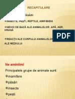 Recapitulare - Grupele de animale