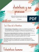 La Fotosíntesis y Sus Procesos Sesión 2