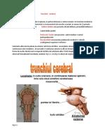 TRUNCHIUL CEREBRAL.docx