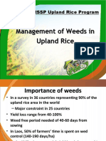 Weeds Management in Upland Rice - Final
