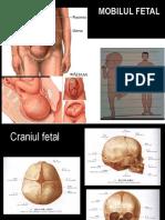 +Mobil fetal,  bazin osos, pelvimetrie, asistenta la nastere