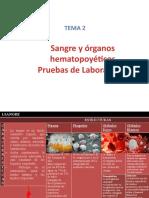 Sangre y organos hematopoyeticos.pptx