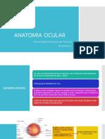 ANATOMIA OCULAR.pptx