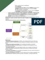 Apuntes economía de la empresa Unidad 2 formas jurídicas de las empresas. 2ºBach