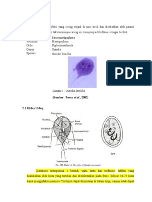 koplalással távolítsa el a parazitákat mik a Trichomonas tünetei a férfiaknál