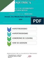 Sesion_10._Sindormes_endocrinos_1 (2)