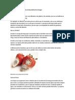 Factores condicionantes para el desarrollo de los hongos.docx