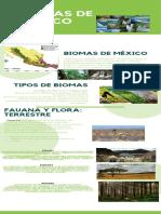 infografia Biomas de Mexico Hernandez Ramirez Leonardo