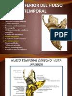 HUESO-TEMPORAL-cara-inferior