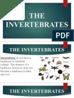 THE INVERTEBRATES