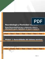 Generalidades del sistema nervioso y filogenia (2)