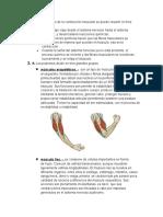 Cuestionario_Biomecanica