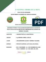 e8af4a81ddd2 ASISTENCIA TECNICA Y EVALUACION DE INJERTOS EN EL CULTIVO DE PALTO (Persea  americana Mill)