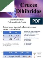 Clase de dihibridos