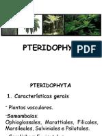 7 - Pteridofitas
