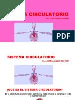 Sistema circulatorio exposicion