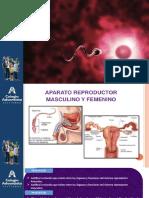 2° Secundaria Aparato reproductor PPT