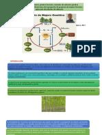 ciclo de mejoramiento foresta