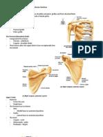 Handouts_Skeletal_Sys_Parts_3-4_Sp11