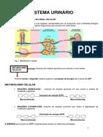 Ficha informativa_ sistema urinário_1