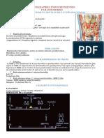 scinti%20endocrinnienne%20parathyroide