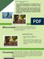 pudricion radicular.pptx