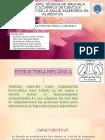 DIAPO DE ESTRUCTURA Y ORGANIZACION- AE