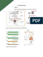 11. Genoma procariota
