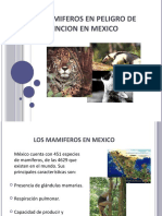 MAMIFEROS EN PELIGRO DE EXTINCION EN MEXICO