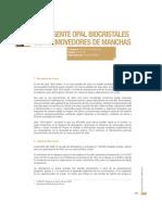 Detergente Opal.pdf